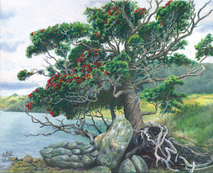 pokutukawa tree by ghotter