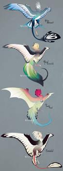 Parakeet Wyvians [OPEN]