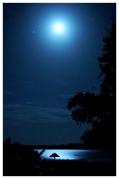 Blue Moon by maxholanda