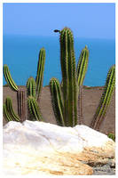 Cactus and Sea 2 by maxholanda