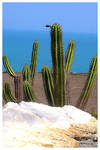 Cactus and Sea 2