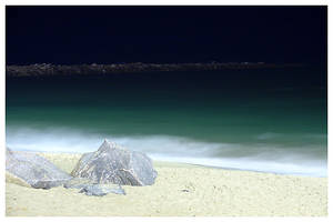 Beach at Night by maxholanda