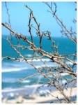 Twigs in front of Sea