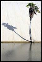 Palmtree, dune and shadow by maxholanda