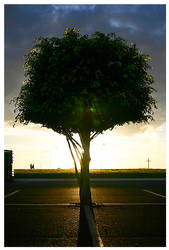 Sunset Tree by maxholanda