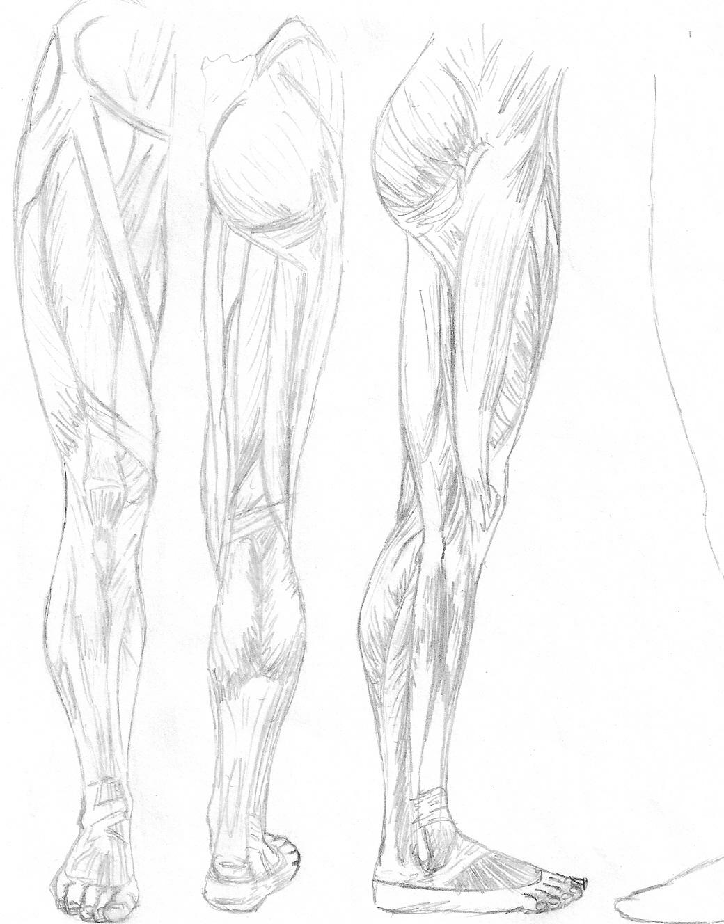 Leg Anatomy by crimson-faerie on DeviantArt