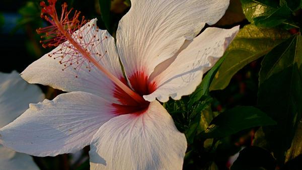 Obligatory Flower Pic 2.0 by PaulinaJB