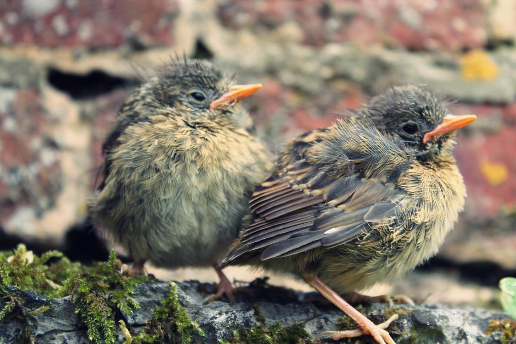 Birds by PrueMarvell