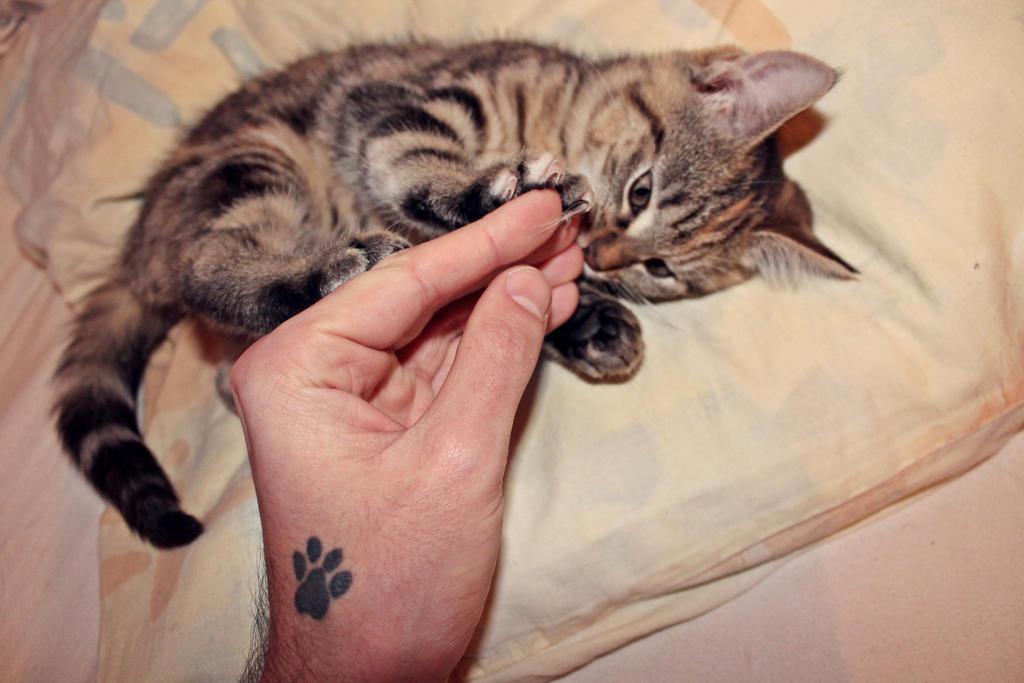Kitty of love by PrueMarvell