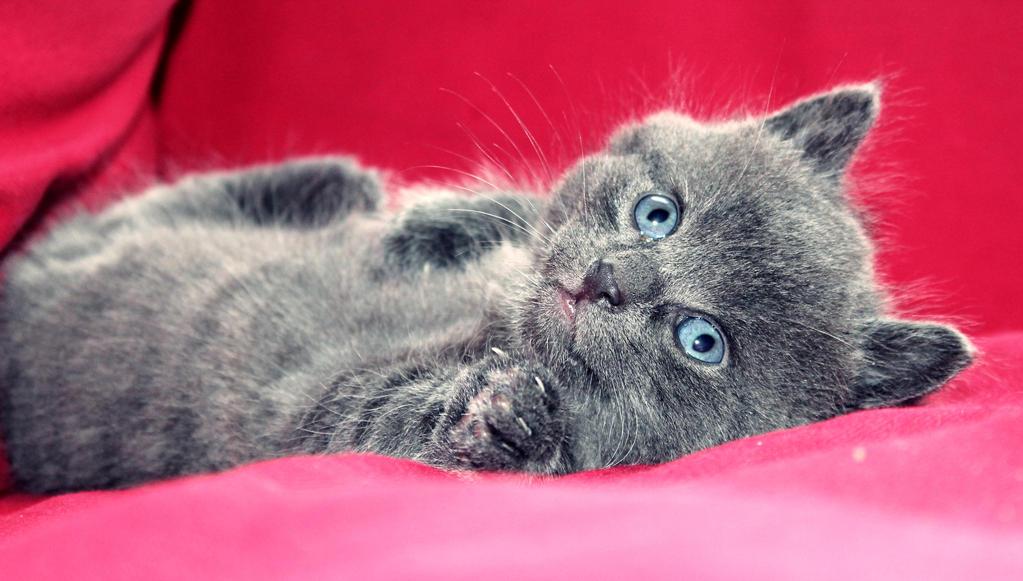 Meiko the little kitten by PrueMarvell
