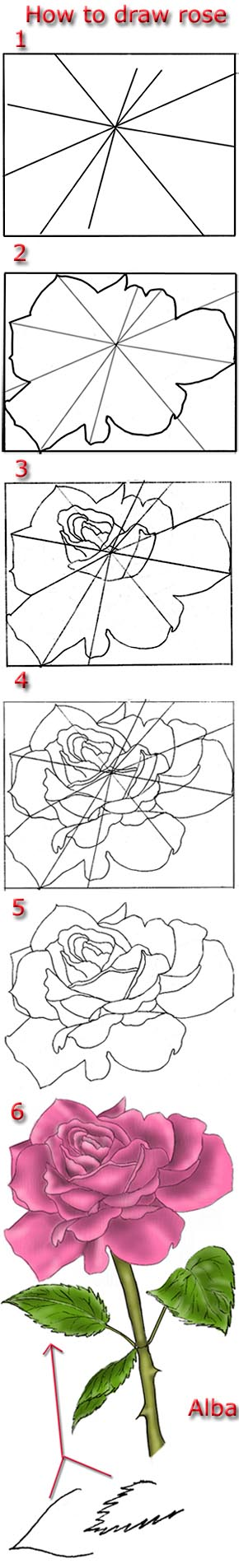 Tutorial draw pink rose by lamorghana