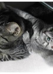 Lazy Days 2 by Aoxa-Cats