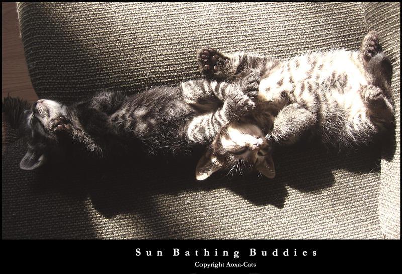 Sunbathing Buddies by Aoxa-Cats