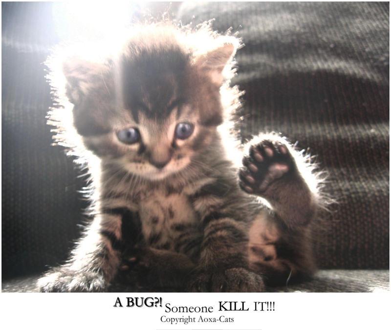 A BUG? Someone KILL IT by Aoxa-Cats