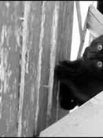 Here Kitty Kitty by Aoxa-Cats