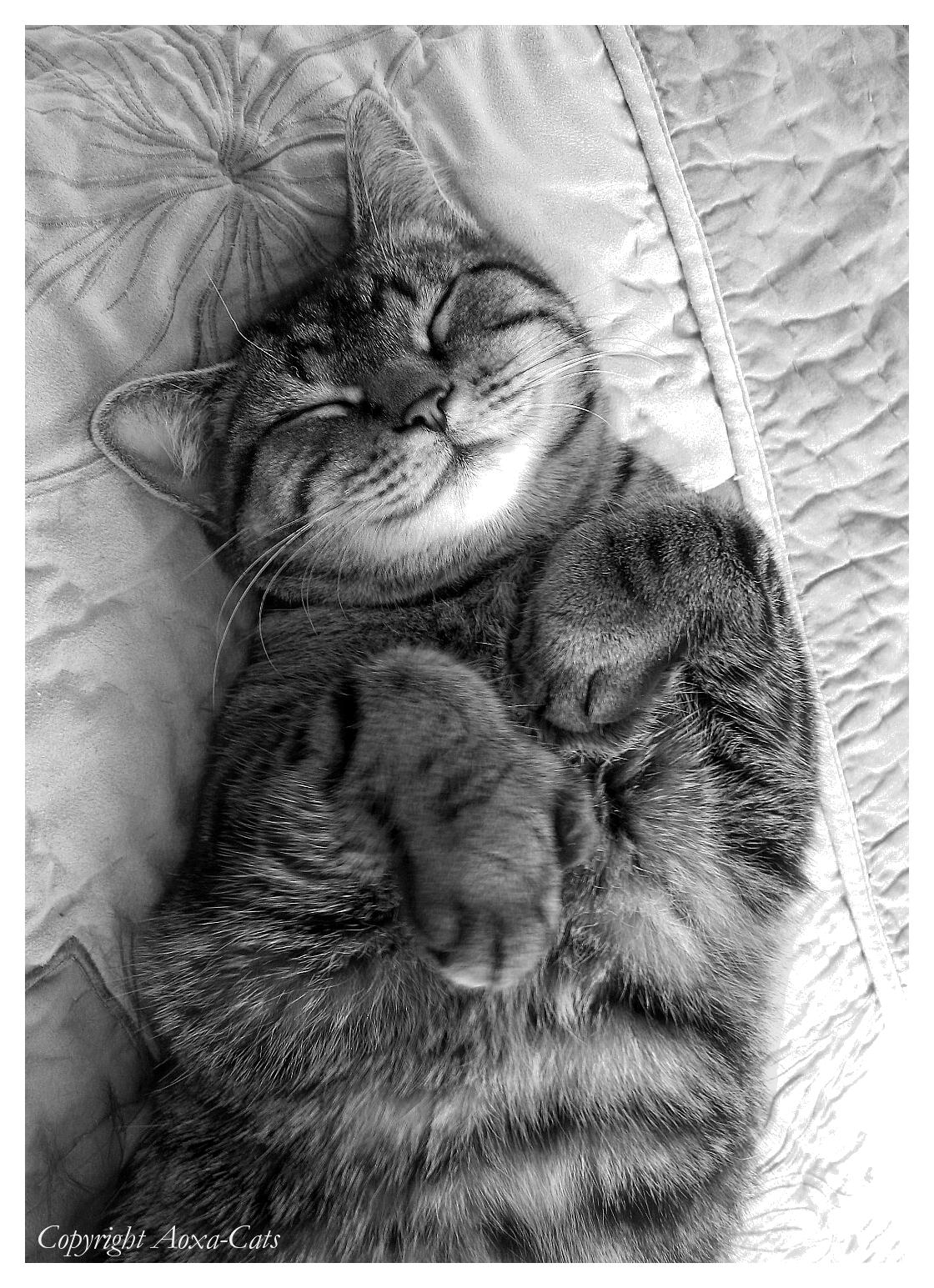 http://fc07.deviantart.net/fs41/f/2009/022/8/2/Heart_Breaking_Smile_by_Aoxa_Cats.jpg