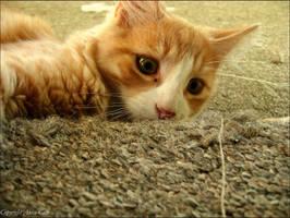 Hiding by Aoxa-Cats