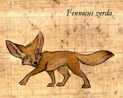 Fennecus zerda by Skia