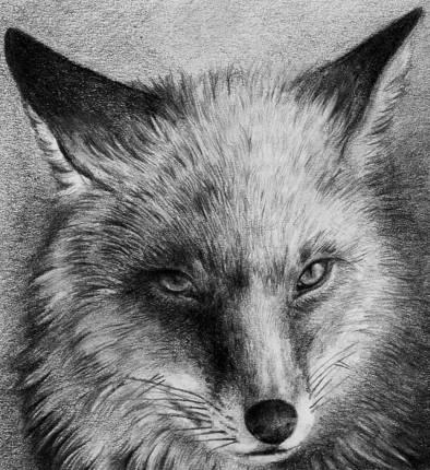 Red Fox by Skia on DeviantArt