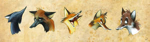 Weird Foxes