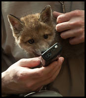 Phone Fox by Skia