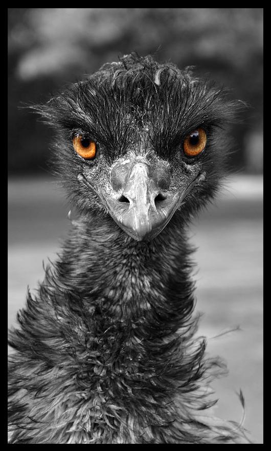 Emu by Skia