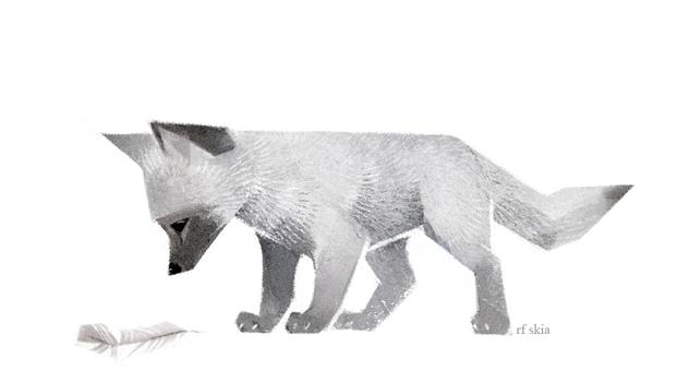 Falconfox Cub