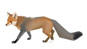 Vulpes Vespertinus (female)