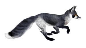 Vulpes peregrinus