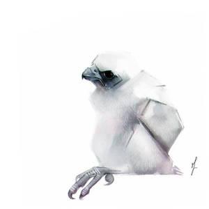 Falcon Chick