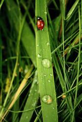 Ladybug's Adventure.