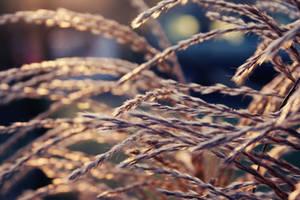 Autumn. by NikolasBrummer
