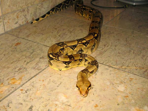 Snake 3 by Mind-Illusi0nZ-Stock