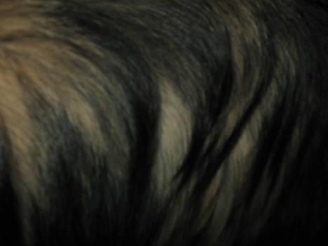 dog hair 2