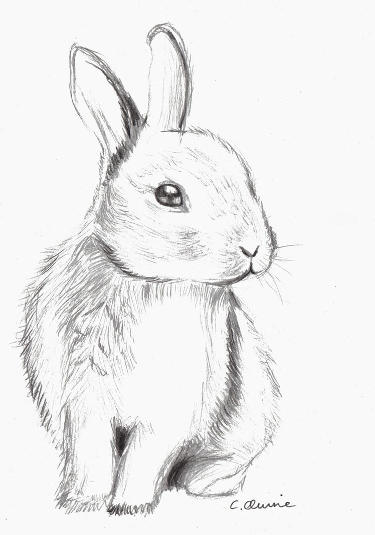 cute bunny drawings - 736×1050