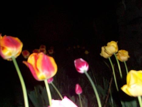 Black Night\Bright Flowers