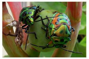 Bugs by kiew1