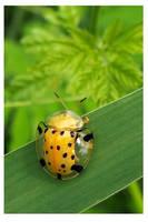 Tortoise bug by kiew1