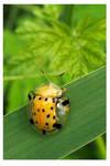 Tortoise bug