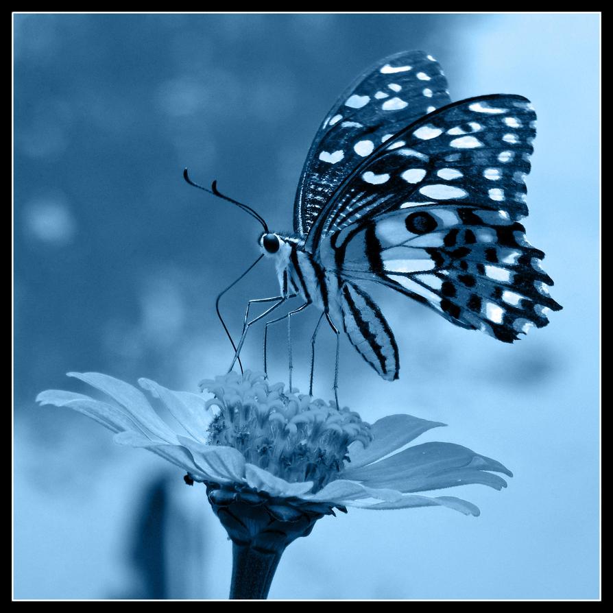 Butterfly by kiew1