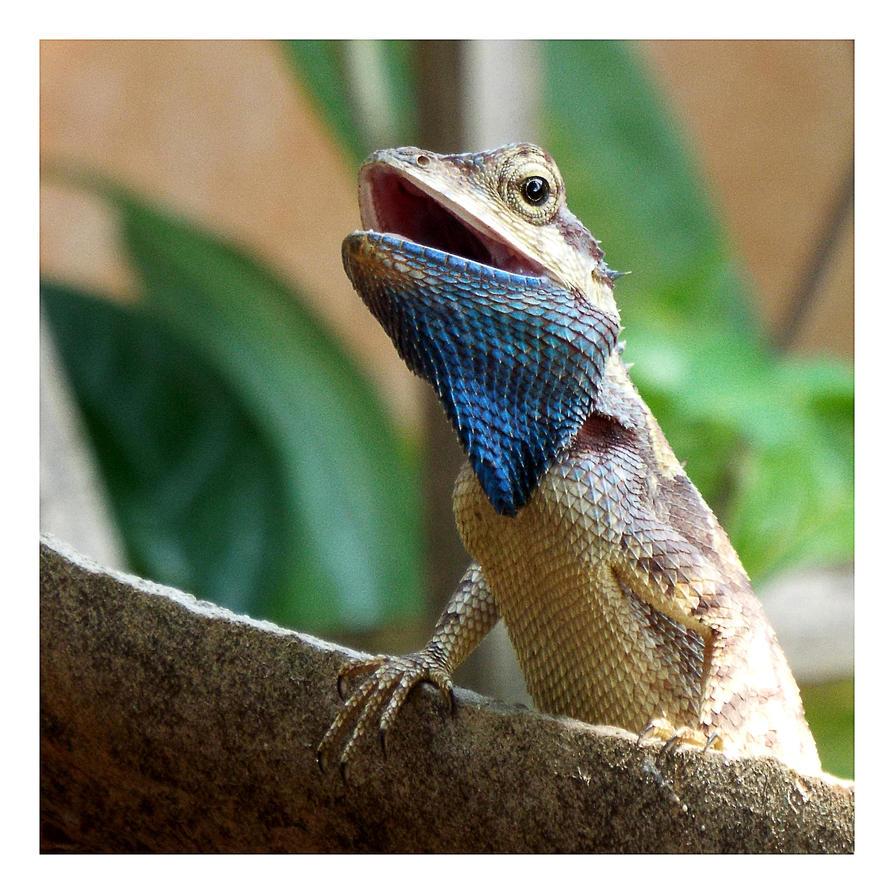 Curious lizard by kiew1