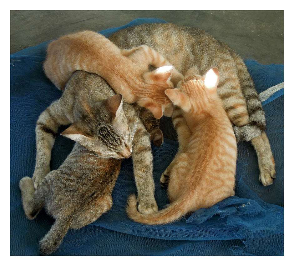 Mother with her kittens by kiew1