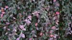Garden Plants by Masterconor