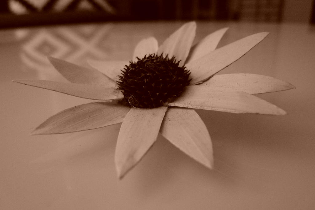 Tea Bagged Flower by EmCh3ng