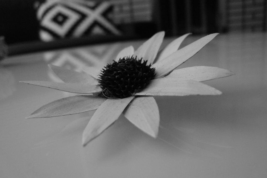Monochrome Flower by EmCh3ng