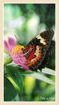Batik on Wings