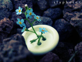 From a fallen button by Lilith1995