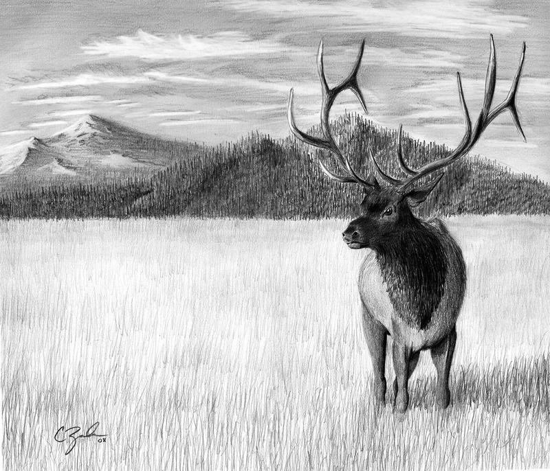Image De Art Deer And Drawing: Elk Pencil Drawing By C-Zavala On DeviantArt