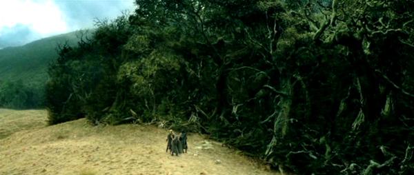 Fangorn forest by ElizabethCameron