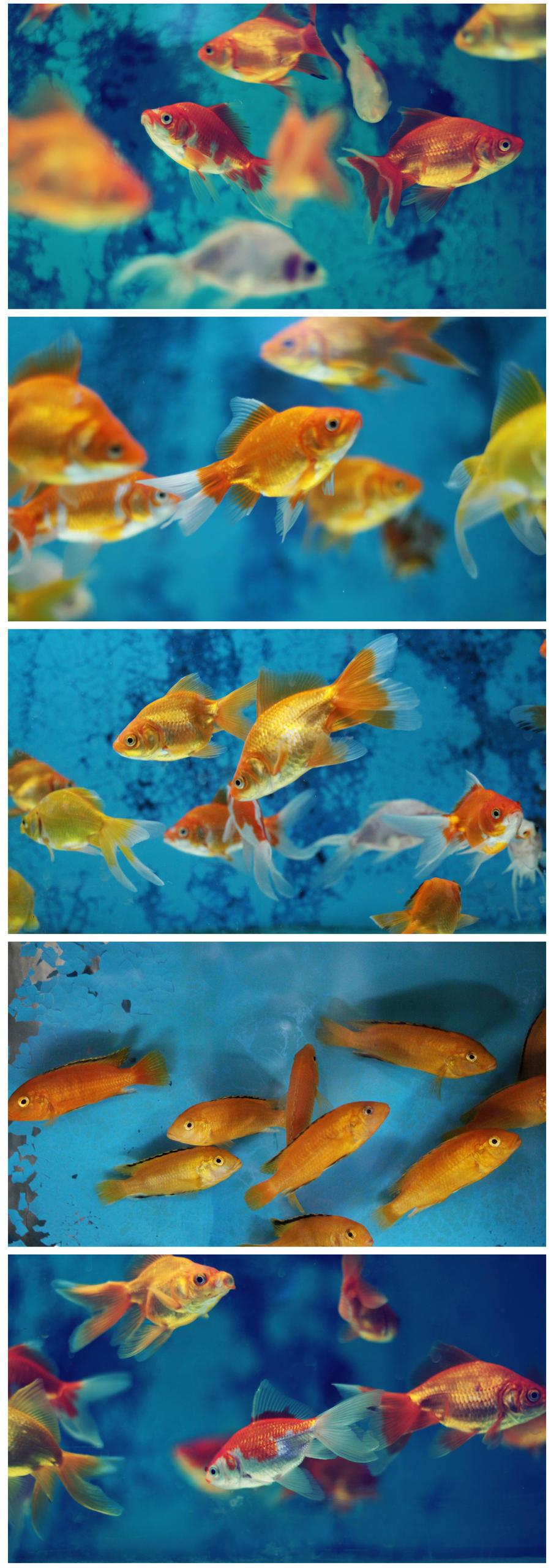 fishes by serhatalbamya